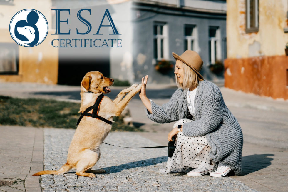 Get Esa Certificate For Dogs